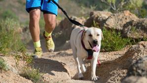 Sport verbindet. Und hier kann das auch w�rtlich genommen werden: Canicross ist Laufen mit dem Hund unter Zug.©iStock.com/Pavel1964