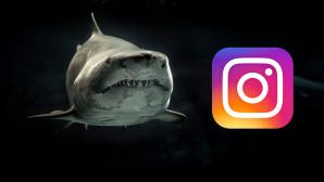 Haifisch und Instagram-Logo ©George Desipris/Instagram/Pexels.com