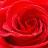 Icon - RoseBook