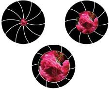 Besser fotografieren: Blenden-Funktion ©COMPUTER BILD
