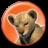 Icon - Löwenbaby