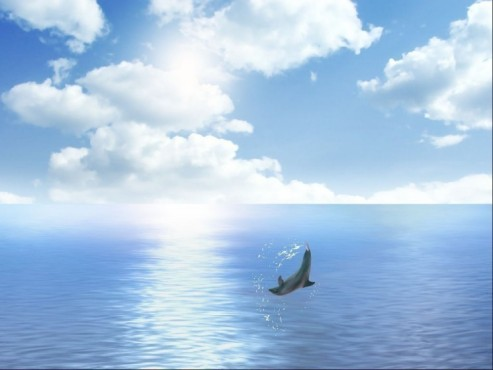 Dolphin Dreams Screensaver