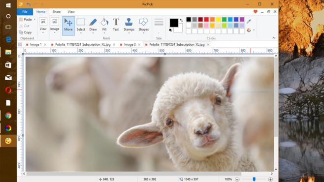 PicPick ©Fotolia--artepicturas-sheep breeding and farming - Schaf Aufzucht