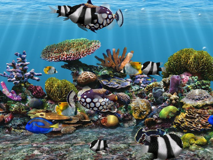 3d fish school screensaver for Moving fish screensaver