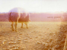"Album-Cover: Savoy Grand – ""Accident Book"""