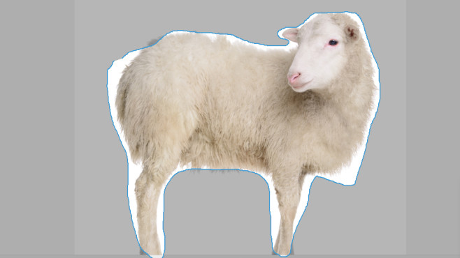 Aufnahmebereich frei festlegen © Fotolia--inna_astakhova-sheep isolated on white
