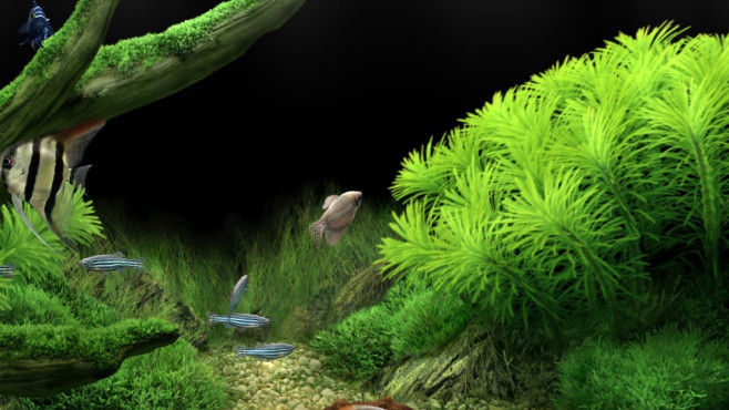 Dream Aquarium Screensaver © COMPUTER BILD
