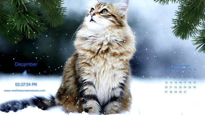 Platz 81: Winterkatzen Screensaver ©COMPUTER BILD