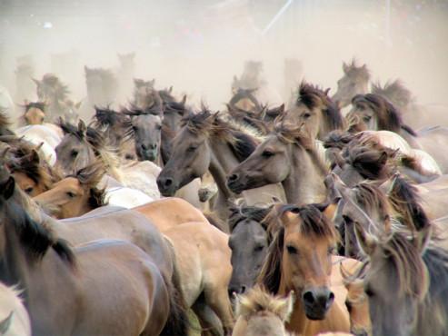 die Herde - von: fotofrank ©die Herde - von: fotofrank