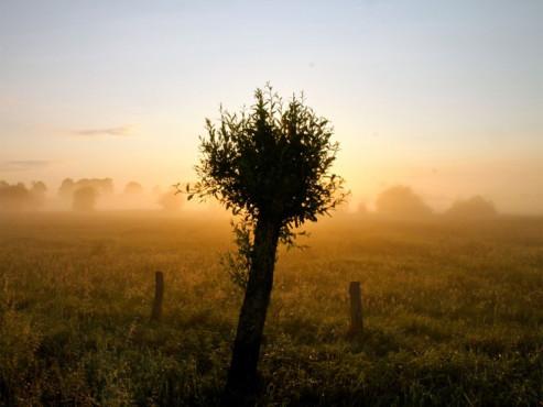 die Morgenlichter - von: Schwanenburg ©die Morgenlichter - von: Schwanenburg