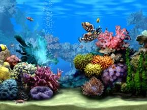 Living Marine Aquarium 2