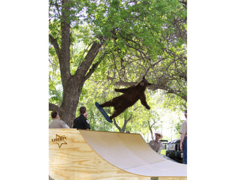 Falling Bear in der Half-Pipe © knowyourmeme.com