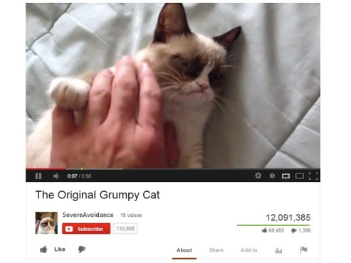 Grumpy Cat © YouTube