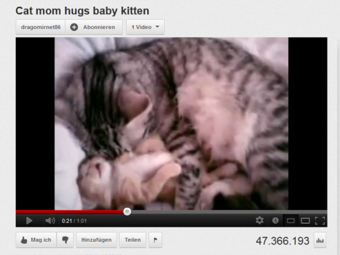 Katzen-Mutter umarmt Baby-K�tzchen © YouTube