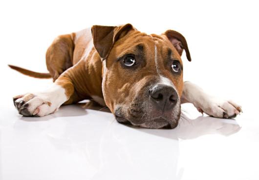 Hund – von: 191grad ©191grad