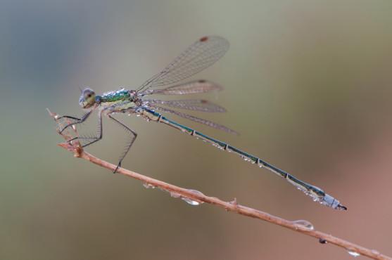 Libelle – von: klosmehl ©klosmehl