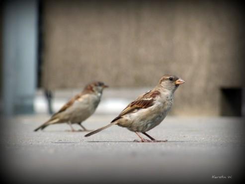 Zweisamkeit – von: Kenjo ©Kenjo