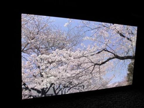 Panasonic präsentiert Riesen-Fernseher mit 145 Zoll ©COMPUTER BILD