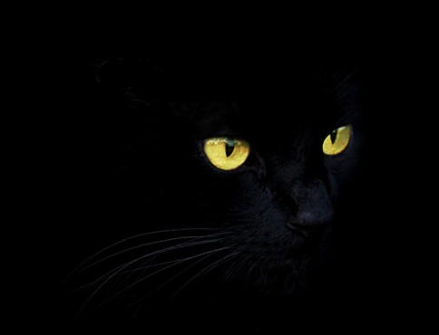Black Cat � von: blustar © blustar