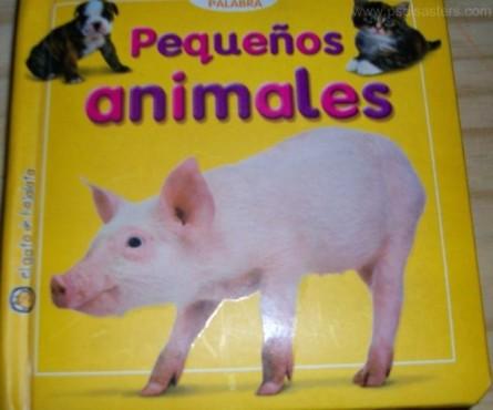 Schwein mit drei Beinen ©psdisasters.com