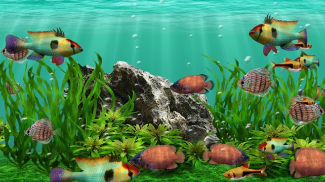 3D Fish School Screensaver: Abtauchen in die Tierwelt © COMPUTER BILD