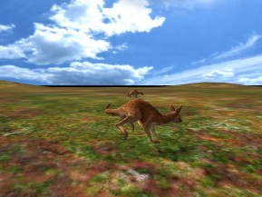 Känguruhs 3D
