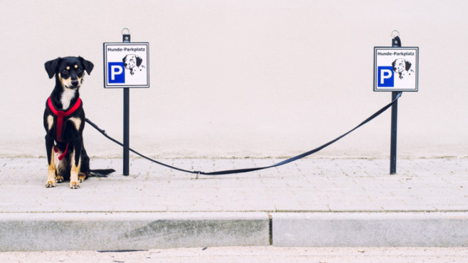 Der geparkte Hund – von: helgenug ©helgenug