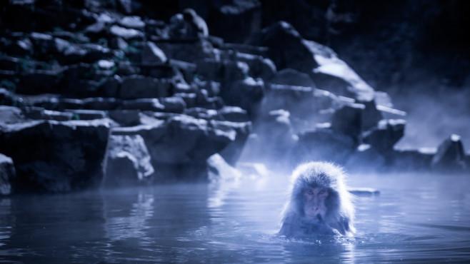Mystic Monkey – von: iensugraphy ©iensugraphy