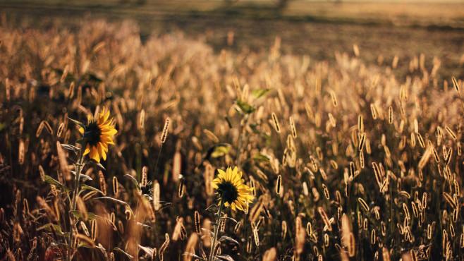 Sun Daze – von: trimorv ©trimorv
