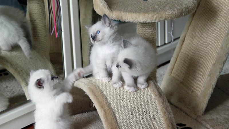 Katzen, Katzenbilder, Katzenfotos - fotocommunityde