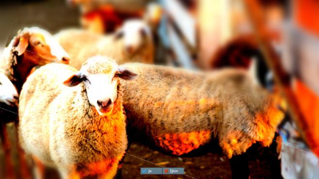 Böcke bunt ©Fotolia--Evgenia Tiplyashina-Herd of Sheep in the pen