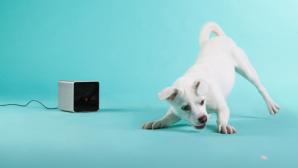Petcube Hundespielzeug ©Petcube
