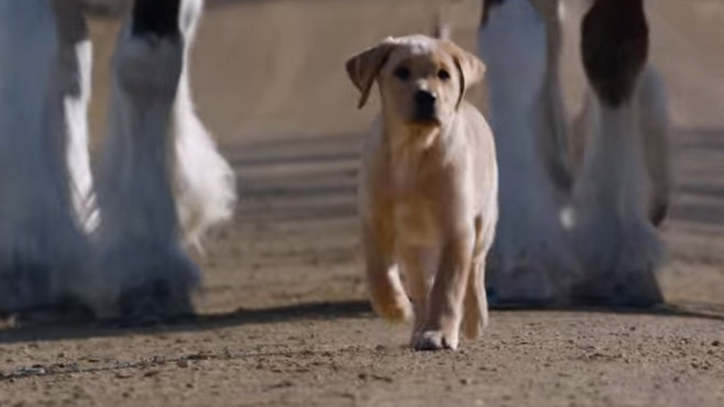 "Budweiser Super Bowl XLVIII Commercial -- ""Puppy Love"" © YouTube, Budweiser"