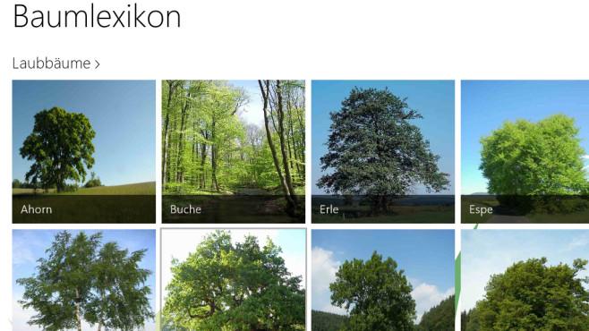 Baumlexikon: Nachschlagen zur Natur ©COMPUTER BILD