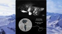 Süß, süßer - einfach zum Knuddeln: Gutschein mit Katzenmotiv ©Ashampoo / Screenshot: COMPUTER BILD