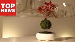 ©Hoshinchu Air Bonsai Garden