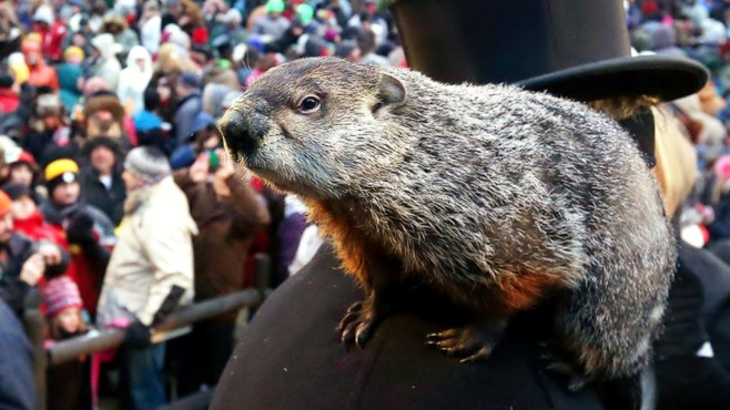 Murmeltier ©groundhog.org