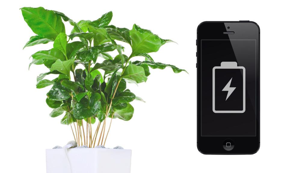 arkyne technologies pflanze mit usb computer bild. Black Bedroom Furniture Sets. Home Design Ideas