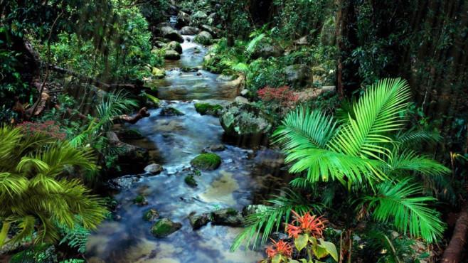 Quelle im Dschungel Screensaver: Fluss samt Palmen ©COMPUTER BILD