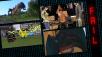 Spiele-Bugs ©Ubisoft / PolygonalLife / YouTube / iStock.com/Gwengoat