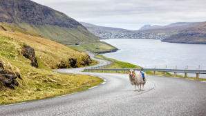 Sheep View © Screenshot: http://visitfaroeislands.com