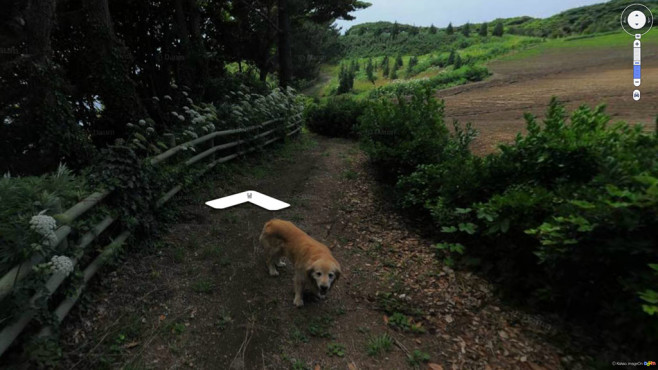 Tierischer Reisegefährte ©Screenshot: map.daum.net