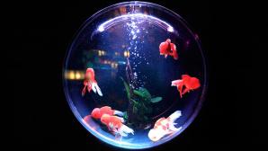 Hacker-Angriff nutzte smartes Aquarium ©pixabay