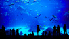 Aquarium ©©istock.com/novikat