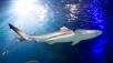 "Aquariumbereich ""Schiffswrack"" ©SEA LIFE"