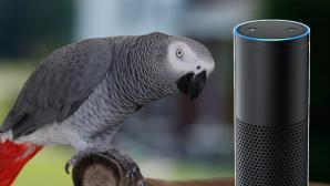 Amazon Alexa: Papagei ©Keith Allison / Amazon