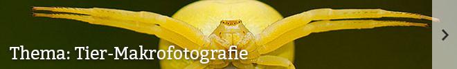 Thema: Tier-Makrofotografie©Jasius/gettyimages