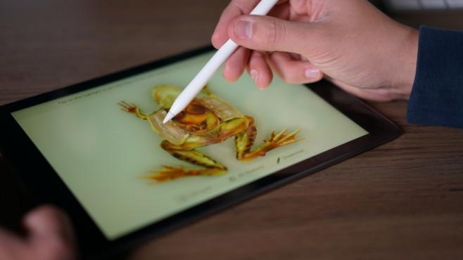 Apple iPad 2018: Frösche virtuell sezieren©COMPUTER BILD