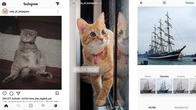Katzenbilder auf Instagram©Instagram, cats_of_instagram