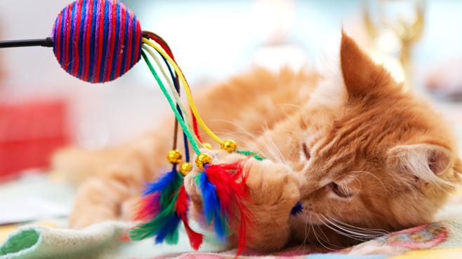 Katzenerstausstattung©iStock.com/dentharg